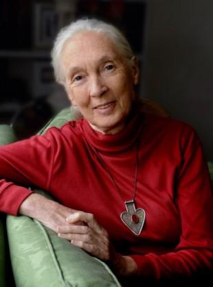 Jane Goodall © Stuart Clark