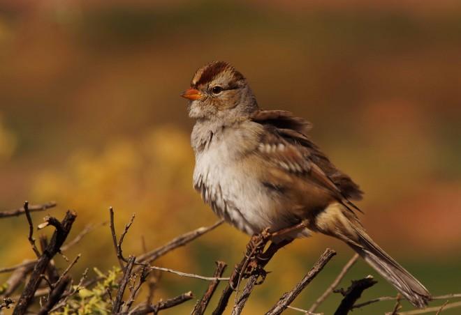 Birdwatching-111