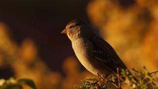 Birdwatching-112