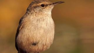 Birdwatching-113