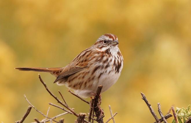 Birdwatching-114