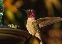 Birdwatching-118