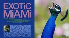 Exotic Miami 220x124
