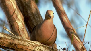 Mourning-Dove-1280x853