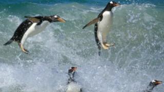 PenguinPlanetOpener