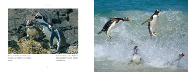 PenguinPlanetSpread