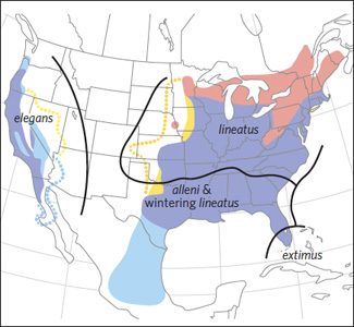 The guide's subspecies range maps include this map for Red-shouldered Hawk. © National Geographic 2011