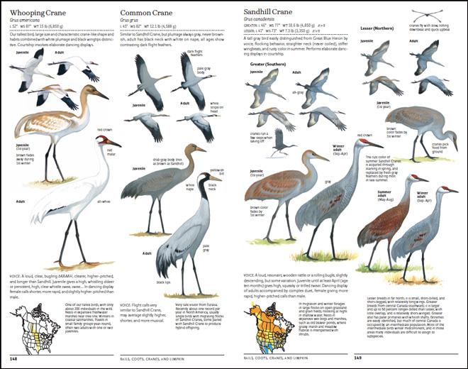 Sibley-Cranes