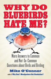 WhyDoBluebirdsHateMe-171