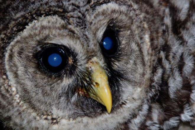 barred-owl-3-1280x853