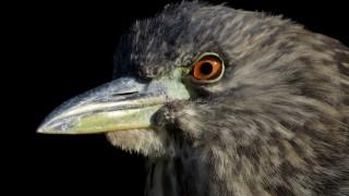 birdwatching3