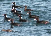 10-12-2013-birds-167