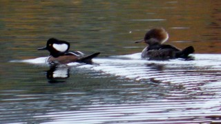 11-9-12-birds-and-west-lake-020