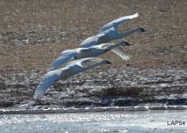 Aviary-Photo_130315374812732057