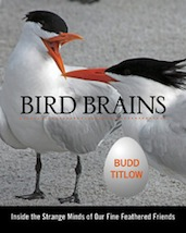 Bird Brains 171x214