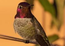 Birdwatching-121
