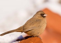 Birdwatching-123