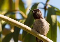 Birdwatching-124