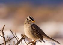 Birdwatching-127