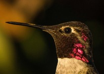 Birdwatching-130