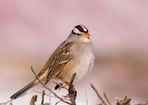 Birdwatching-132