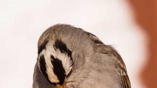 Birdwatching-133