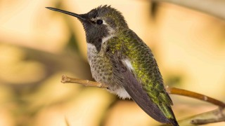 Birdwatching-134
