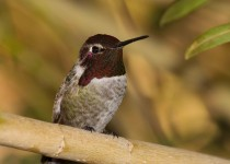 Birdwatching-135