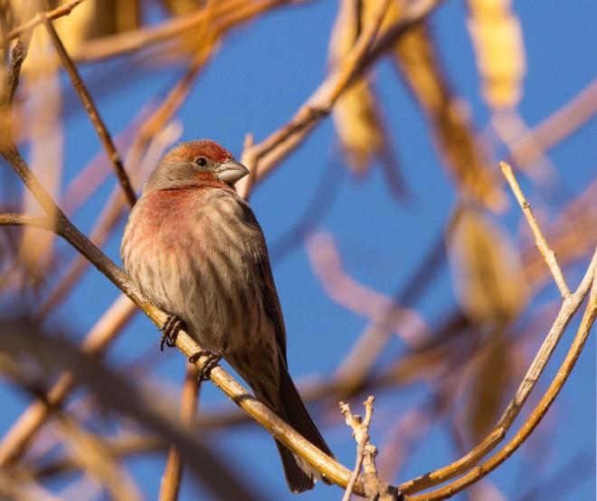 Birdwatching-136