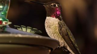 Birdwatching-138