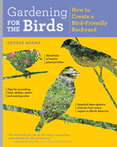 Gardening-for-the-Birds-171