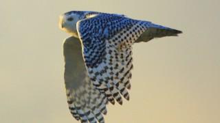 IMG_OWL2