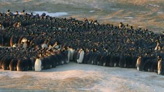 Penguin-huddle