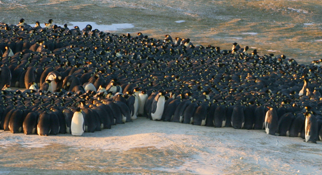 Penguin-huddle