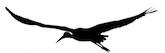 crane_logo2 165x53