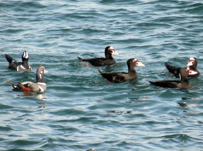 10-12-2013-birds-164