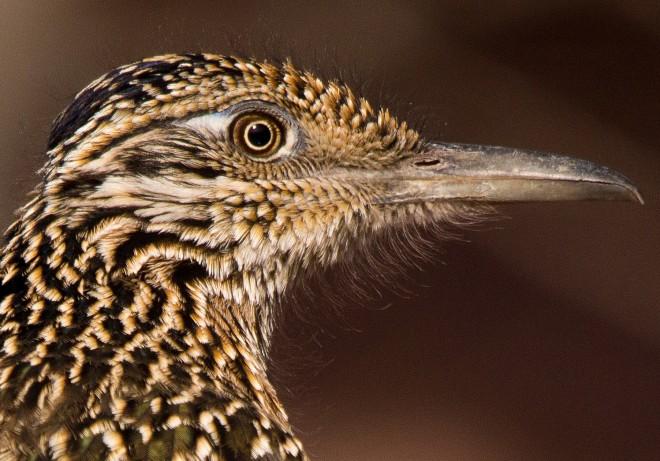 Birdwatching-142