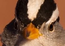 Birdwatching-147