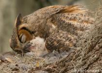 Owls-1938
