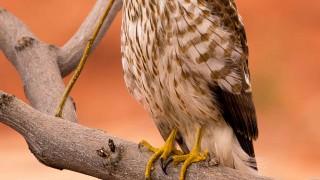 Birdwatching-149