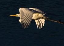 Birdwatching-150
