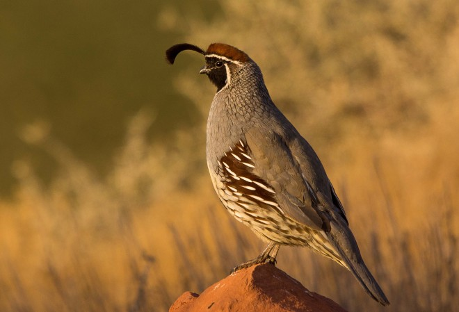 Birdwatching-152