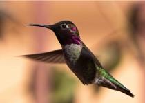 Birdwatching-158