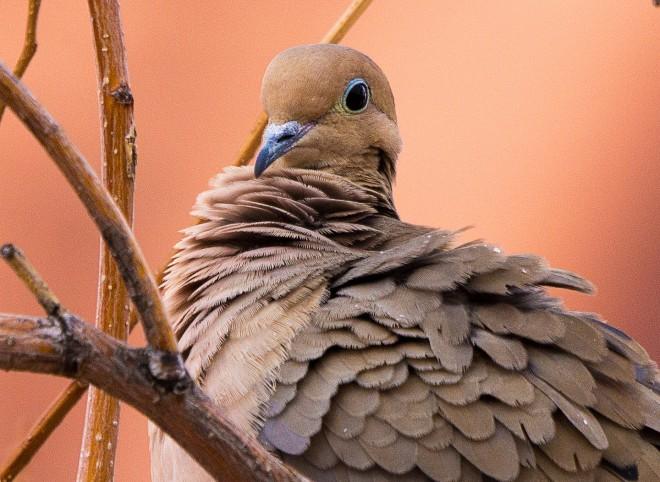 Birdwatching-160