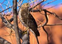 Birdwatching-161
