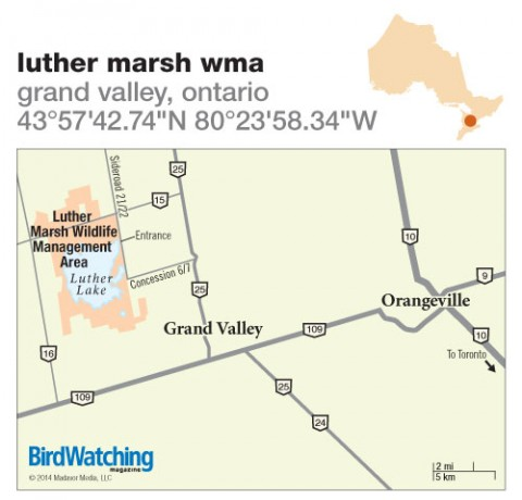 181. Luther Marsh WMA, Grand Valley, Ontario
