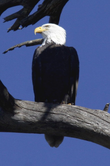Bald-Eagle-Lake-Mary-9-11-10-1-200PI