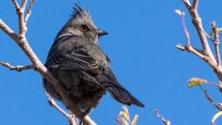Birdwatching-162
