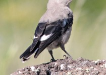 Clarks-Nutcracker-Wilson-Meadow-6-11-11-4-200PI