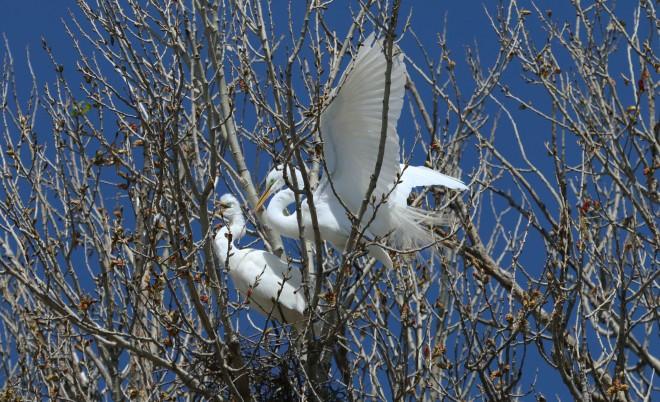 Egret-Stick1